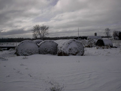 snow covered hay